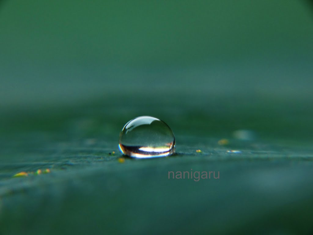Nani Garu: Eye of the Nature