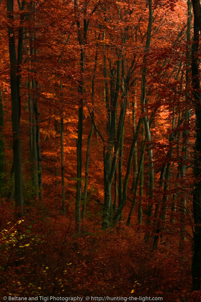 Photo by Beltane; Processing by Tigi: Red Forest, 2012